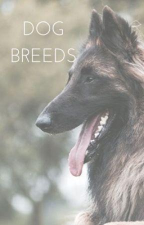 dog breeds , yay by negoneThot