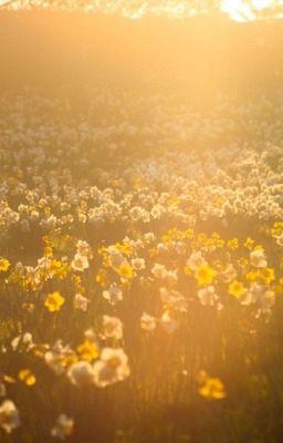 [ PD101-2   W1 ] Daffodils