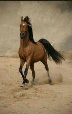 Das Pferd, welches es eigentlich nicht geben dürfte by ClaryFaye2