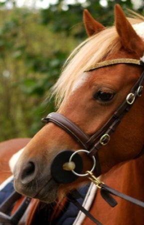 Hästlivet  by TildaMllerstrm