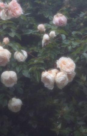 rosae by nymphaeum