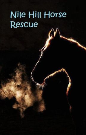 Nile Hill Horse Rescue by HeavensLittleSecret