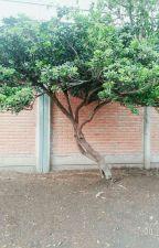 el árbol maldito  by itzelrol