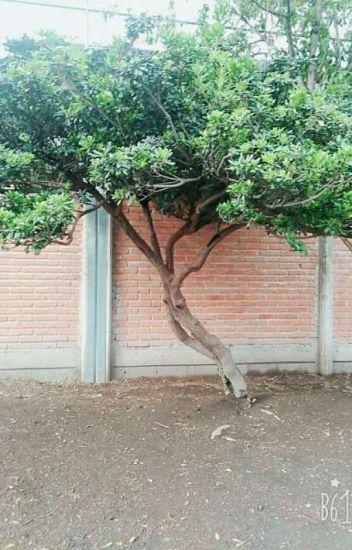 el árbol maldito