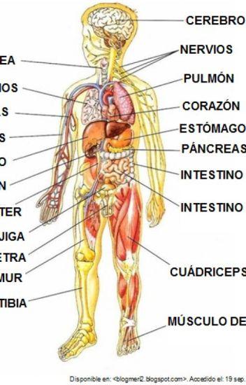 Conociendo el cuerpo humano aslynarrieta wattpad - Interior cuerpo humano organos ...