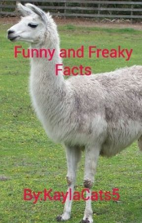 Funny And Freaky Facts by KaylaCats5