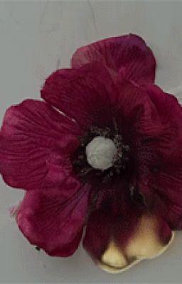 [Oneshot] (Junseob) Hoa trái mùa