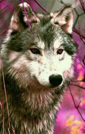 Special Little Wolf (ON HOLD) by Burakku_Herufaia