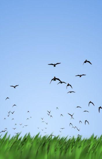 Birds Come to School