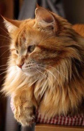 Brickie the kitty (HIATUS) by BrickisSwag