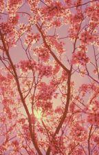 Flowers bloom by Kimidi2004