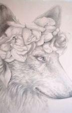animal jam: crowned by sacrednight1