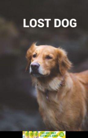 Lost dog by huhubunuguhuuguhhf