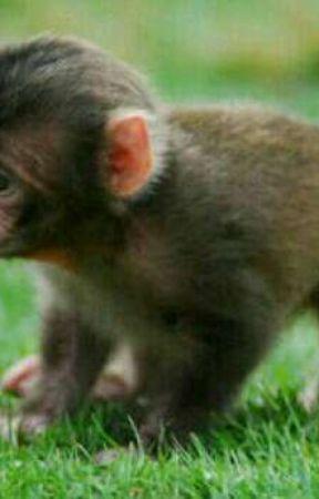 Tatlı Maymunlar Cenneti Tanıtım Ve Hikayenin En Başı Wattpad