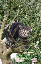 Warrior Cats RS - Part 1 by KikianaB