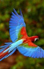 Wings of Affinity (Werebird x Werewolf) by Jayeeta8