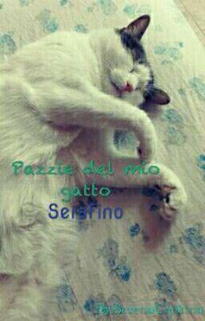 Pazzie Del Mio Gatto Serafino Buonanotte Puffo Wattpad