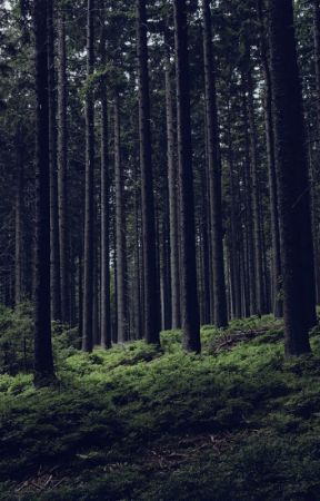 Into the Woods by CassiopeiaSullivan