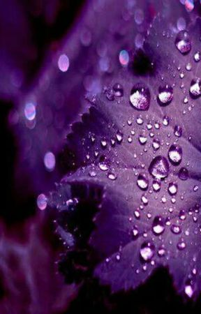 DEW DROPS by dhartisri