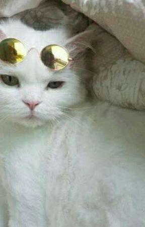 Gato  by rechtx