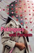 Pekingese and Persian by ejsattler