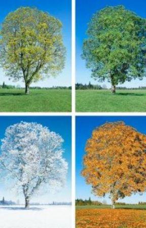 Canada's Four Seasons by kaylalui_