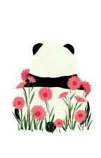 My Little Panda  by Momokyk
