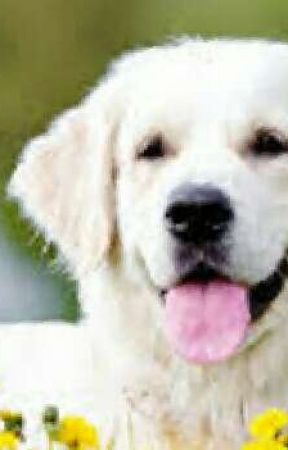 Dog facts + LIFE HACKS