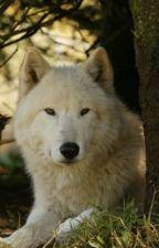 The Wolf inside (Austin Mahone Werewolf love story) by KarlieHayzeMahomie4D
