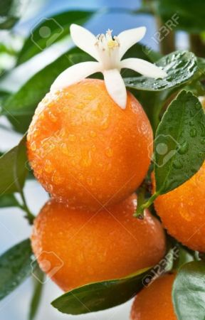 Side Streets and Tangerines by JoeyNoir11