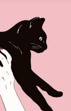 35 najbardziej interesujących ciekawostek o kotach! by SekcjaStrachu