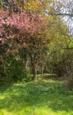Dynamite In a Lavender field  by karen4352