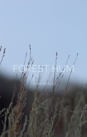 Forest Hum by julykings