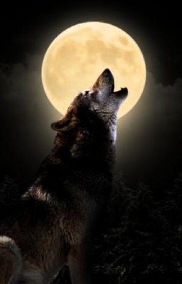 Werewolf At Midnight