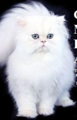 Đọc truyện CON MÈO BÍ ẨN (Tên gốc: The Mysterious Cat)