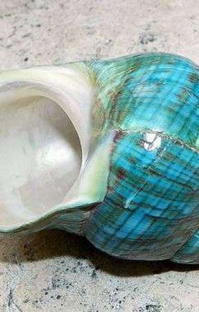The Broken Seashell by TsianinaLiv