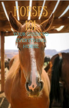 Horses 101: your guide to everything horse by fionadesiree
