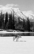 Farkasokhoz Száműzve by AudreyDaniels