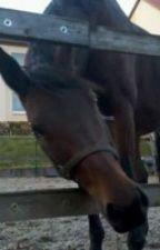 Pferde Spüche / Etwas für Pferdefreunde by TeenWolfGirl2