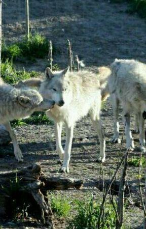 a wolf story enemies wattpad