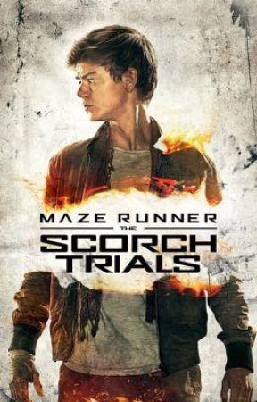 Scorch Trials (Newt X Reader) Sequel by NatashaTasyaar