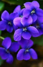 Violet by MidgetEren