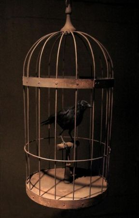 Caged - Criminal Minds Fanfic - Chapter 6 - Wattpad