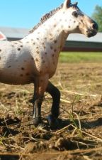 Model horse photography competitions  by Fox_BreyerSchleich