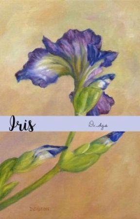 Iris   •Philip Hamilton X reader *Book Two* by dv_dgs