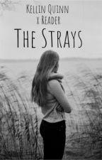 The Strays // Kellin Quinn x Reader // by xx1morgan1xx