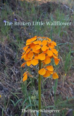 Broken Little Wallflower by TheHorseWhisperer