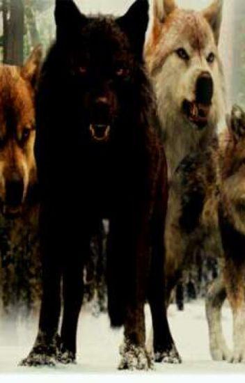 Twilight •wolf pack prefrences - lil_boo_64 - Wattpad