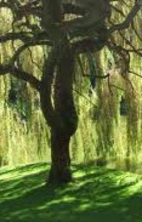 Willow, Willow, Willow by WriteYourHeartOut