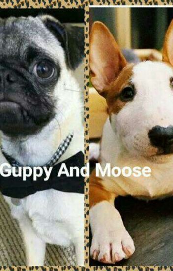 The Adventures Of Guppy And Moose